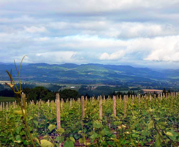 © Advanced Vineyard Systems Vineyard in the Valley