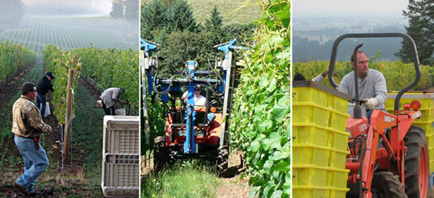 © Advanced Vineyard Systems Vineyard Management
